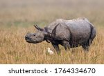 The Indian Rhinoceros  Also...