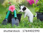 White Puppy Playing With Garden ...