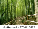 Scenery Of Bamboo Forest In...