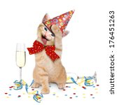 Stock photo hangover cat after party on white background 176451263