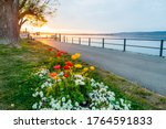 first rays of sunshine on colorful flowers on the waterfront of the harbor of the city of La Neuveville at sunrise on Lake Biel. near Neuchatel, Bernese Jura Canton of Bern, Switzerland