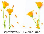bright marigold flowers...   Shutterstock . vector #1764662066