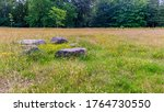 Meadow With Overgrown Grass ...