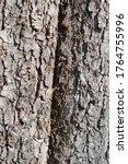 Common Horse Chestnut Bark...