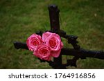 Roses Attached To An Old Grave...