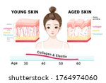 young and aged skin. collagen...   Shutterstock .eps vector #1764974060