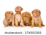 Group Bordeaux Puppy Dog....