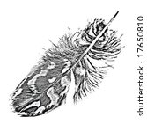 short eared owl feather quill ... | Shutterstock . vector #17650810