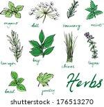 assorted fresh herbs vector  | Shutterstock .eps vector #176513270