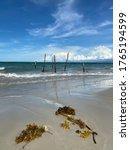 Seaweed At Beach Coast. Blue...