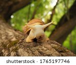 Achatina Snail With Antennae...