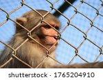 Monkey Sitting Behind Bars...