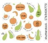 pumpkin  squash  zucchini ...   Shutterstock .eps vector #1765434773