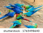 Different Species Of Macaws...