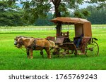 The Horse Cart Driver Take A...