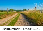 Grassy Fields And Trees With...