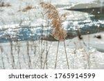 Reeds Flying In Gradually...
