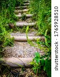 Steps At A Forest   Photo