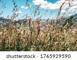 flowery and sunny meadow in the ...   Shutterstock . vector #1765929590