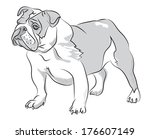 vector sketch drawing bulldog... | Shutterstock .eps vector #176607149