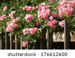 Stock photo rose 176612600