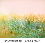 morning dew on the meadow... | Shutterstock . vector #176617574