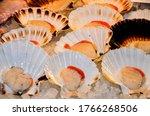 Salt Water Bivalve Molluscs Ar...
