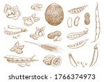 nuts  beans and legumes vector...   Shutterstock .eps vector #1766374973