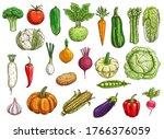 farm vegetables isolated vector ... | Shutterstock .eps vector #1766376059