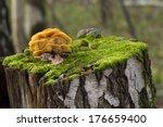 Mushrooms  Growing On A Tree...