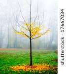 Ginkgo tree in autumn and fog - stock photo