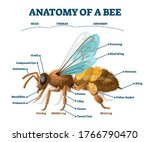 anatomy of bee educational... | Shutterstock .eps vector #1766790470