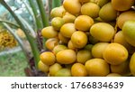 Date Of Palm Branch And Date O...