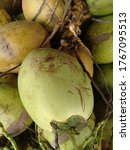 Small photo of Dugan fruit (young coconut) is ready to be sold to consumers