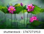 Beautiful Pink Lotus Flower In...