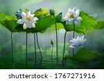 Beautiful White Lotus Flower In ...