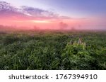 Twilight on a field covered with flowering lupines in spring or early summer season with fog and trees on a background in morning. Landscape. - stock photo