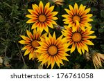 yellow and red flowers in a