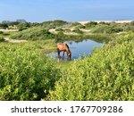 Corolla Beach  Outer Banks ...