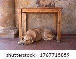 Dog Sleeping Under A Table