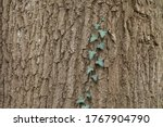 A Close Up Of The Bark Of An...