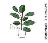 vector illustration plant ficus ... | Shutterstock .eps vector #1767989696