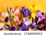 Irises On The Colorful...