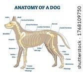 anatomy of dog skeleton with... | Shutterstock .eps vector #1768109750