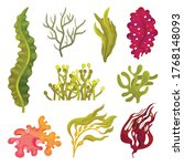 Seaweeds Or Plants And Aquatic...