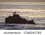 Pair Of Seagulls On The Rocks...
