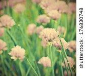 beautiful violet flowers of...