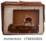 Cute Dog In Suitcase On An Old...