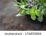 herbs still life.  with oregano ... | Shutterstock . vector #176855804
