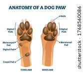 anatomy of dog paw structure... | Shutterstock .eps vector #1768560086